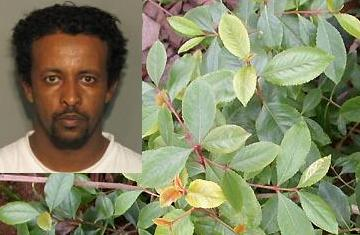 Busted for Khat at Memphis Smart Mart at Tadias Magazine