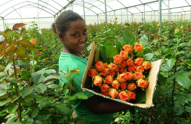 Indian Growers Help Ethiopia Become World&rsquo;s Fourth Largest Flower Exporter